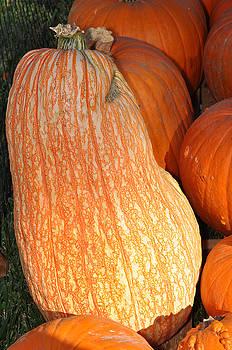 Teresa Blanton - Funky Pumpkin