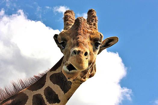 Funny Face Giraffe by Sheila Brown