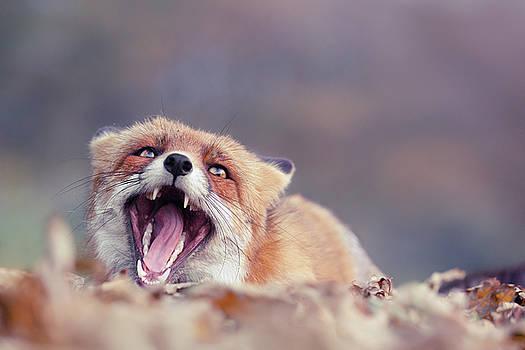 Funny Fox Series - Screaming Fox by Roeselien Raimond