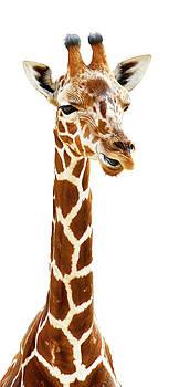 Funny Giraffe by Athena Mckinzie