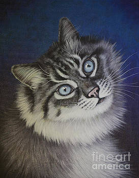 Furry Tabby cat by Tish Wynne