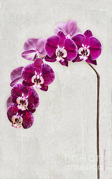 Fuschia Orchid Standing Tall - 22.5 x 36 by Barbara McMahon