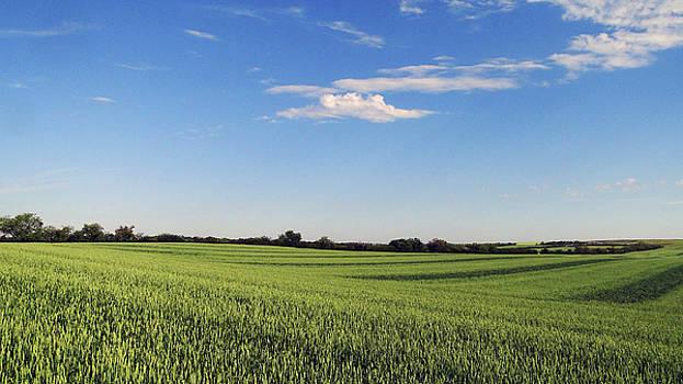 Future Harvest by Blair Wainman