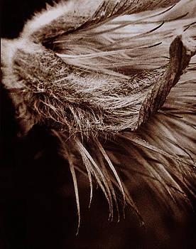 Fuzzy by Christine Wagner