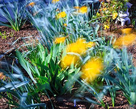 Allan Levin - Fuzzy Daffodils