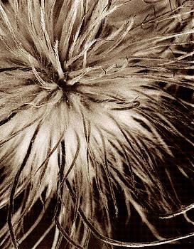 Fuzzy Dandelion by Christine Wagner