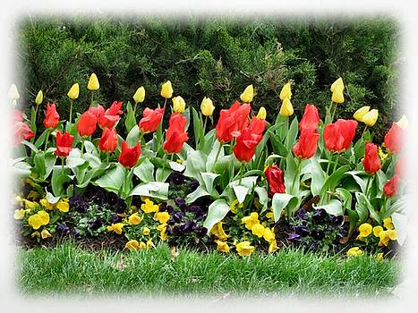 Fuzzy Tulip Garden by Camera Candy