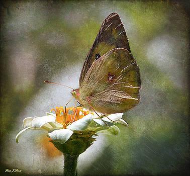 Fuzzy wings by Fran J Scott