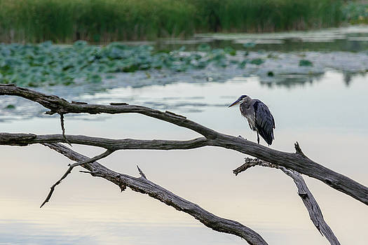 FX115A-13 Heron by Ohio Stock Photography