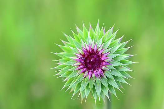 FX1M-97 Green Flower by Ohio Stock Photography