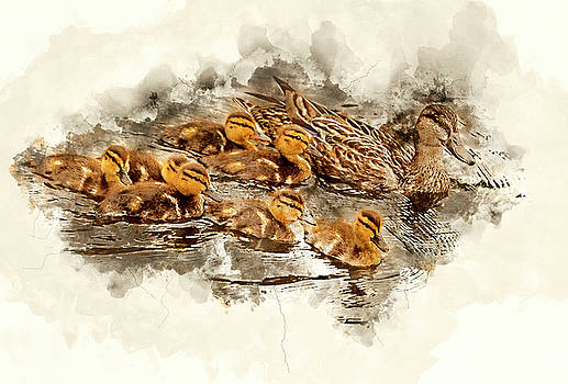 Gadwall with Chicks - Watercolor by Gordon Ripley