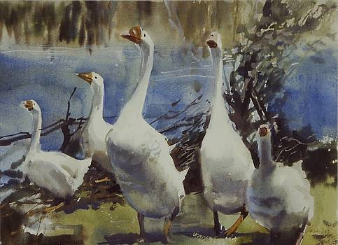 Gaggle of Geese by Charles Hawes