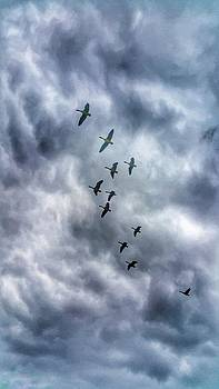 Gaggle of Geese by Abbie Shores
