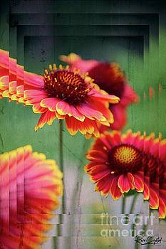 Gaillardia Is In The House by Rene Crystal