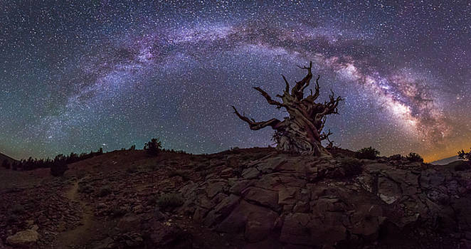 Galactic Keeper by Tassanee Angiolillo