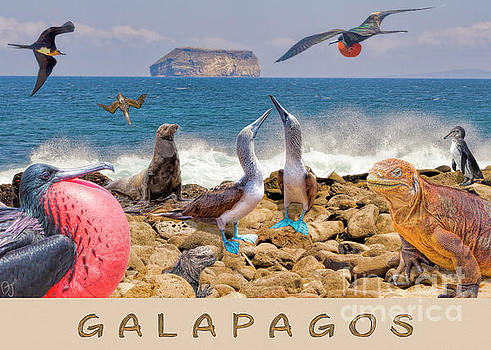 Galapagos One by Ecuador Images