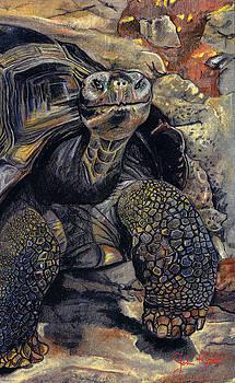 Galapagos Tortoise by John Keaton