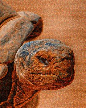 Galapagos Tortoise Mosaic by Steven Howes