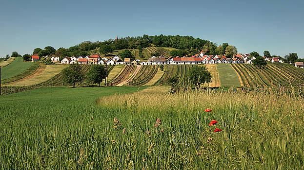 Galgenberg Kellergasse im Weinviertel im Sommer by Menega Sabidussi