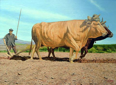 Galicia Rural by Tony Banos