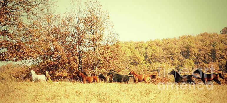 Dimitar Hristov - Galloping Horses Panorama
