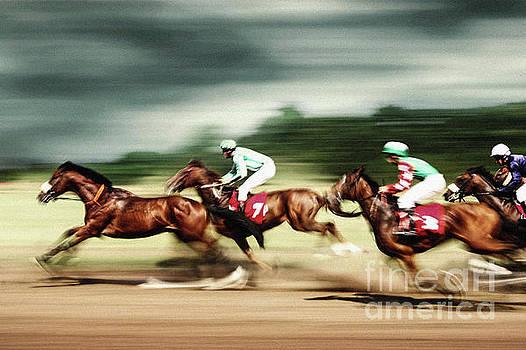 Gamble horses Race horses galloping by Dimitar Hristov