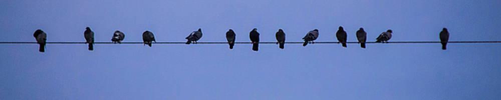 Gang of Pigeons 2 by Terepka Dariusz