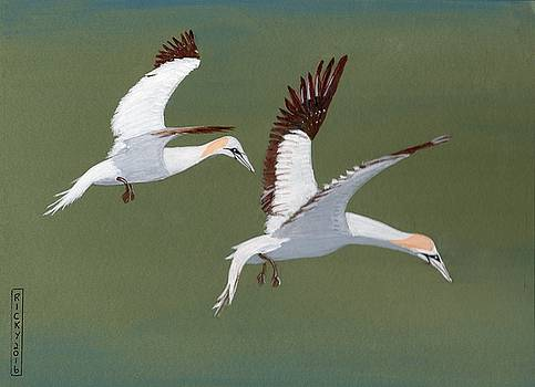 Gannets - painting by Veronica Rickard