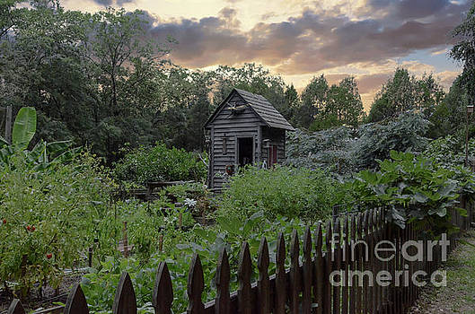 Dale Powell - Garden and Shed