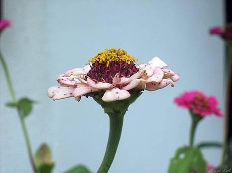 Garden Beauty 2 by Ivana  Egic