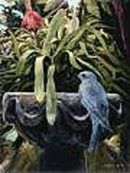 Garden Bluebird by Steve Greco