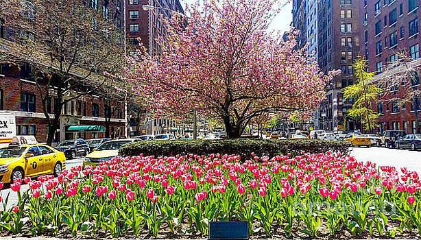 Garden by Brianna Kelly