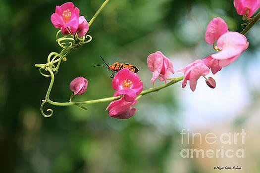 Garden Bug by Megan Dirsa-DuBois