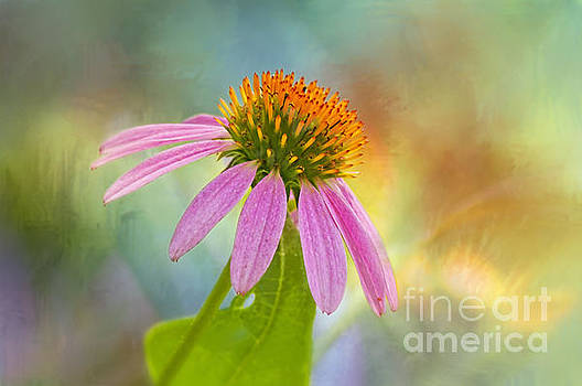 Garden Delight by Bonnie Barry