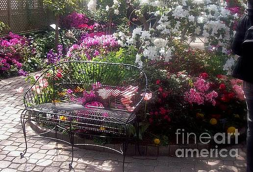 Garden Delight by Sandra McClure