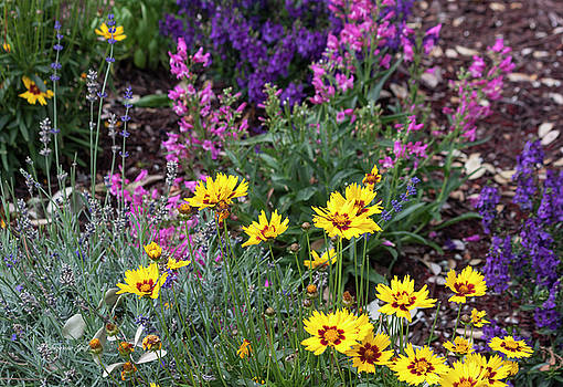 Garden Delight by Suzanne Gaff