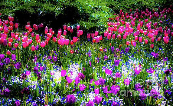 Garden Flowers with Tulips by D Davila