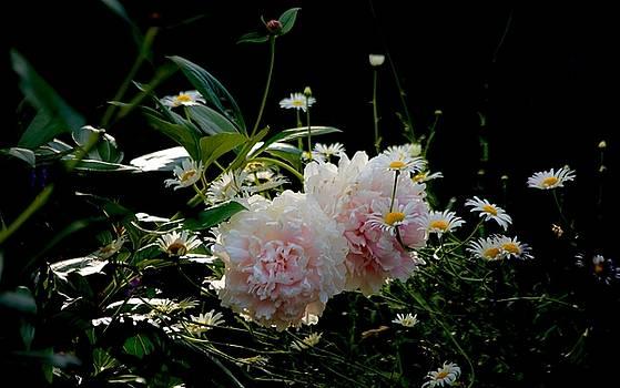Garden by Gillis Cone