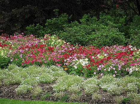 Garden Glory by Camera Candy