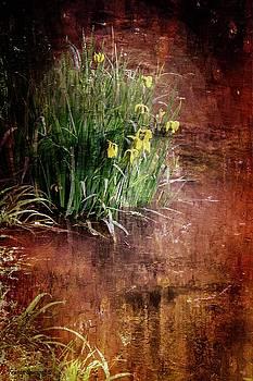 Garden in the Water by Wesley Nesbitt