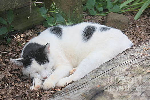 Garden Kitty 5 by Wendy Coulson