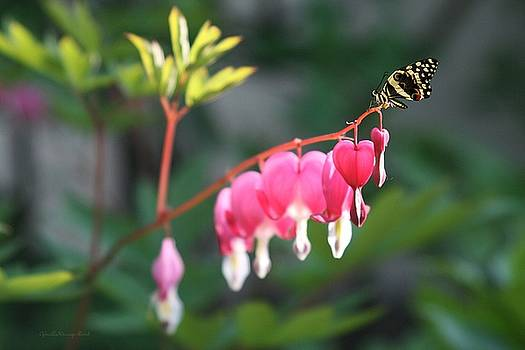 Garden Life by Gabriella Weninger - David