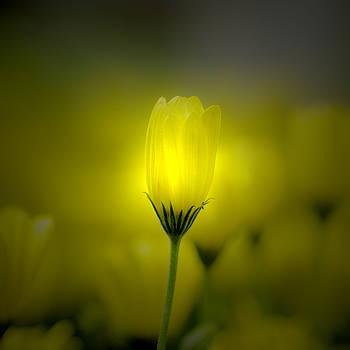 Garden Light by Rod Sterling