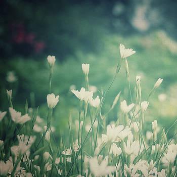 Garden by Linda Hoey