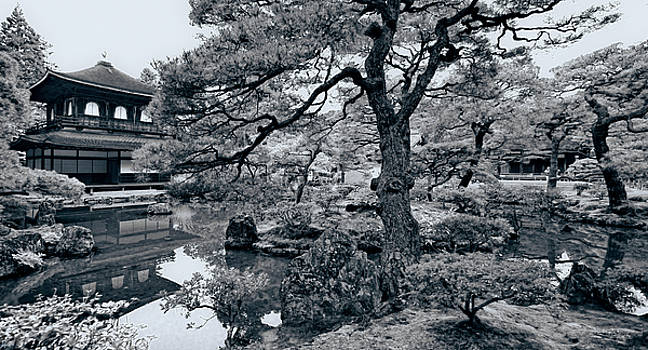 Garden Of Earthly Delight by Wayne Sherriff