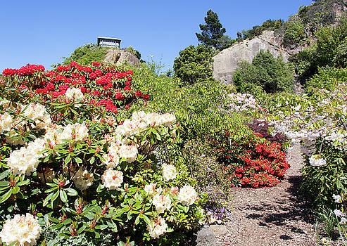 Ramunas Bruzas - Garden of Roses