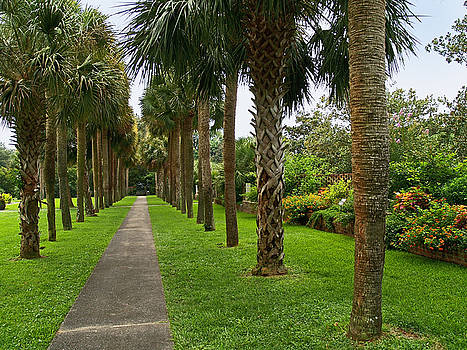 Garden Palm Trees by Andrew Kazmierski