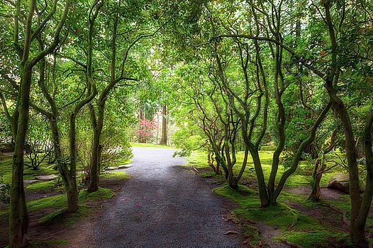 Garden Path in Spring by David Gn
