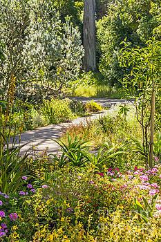 Kate Brown - Garden Path