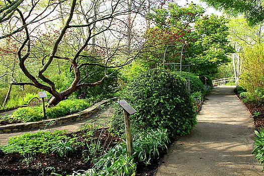 Allen Nice-Webb - Garden Paths